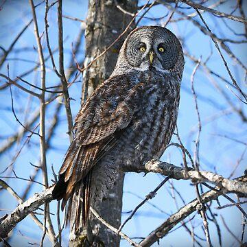 Watcher of the woods by locustgirl