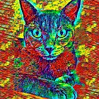 CAT COLORFUL von fuxart