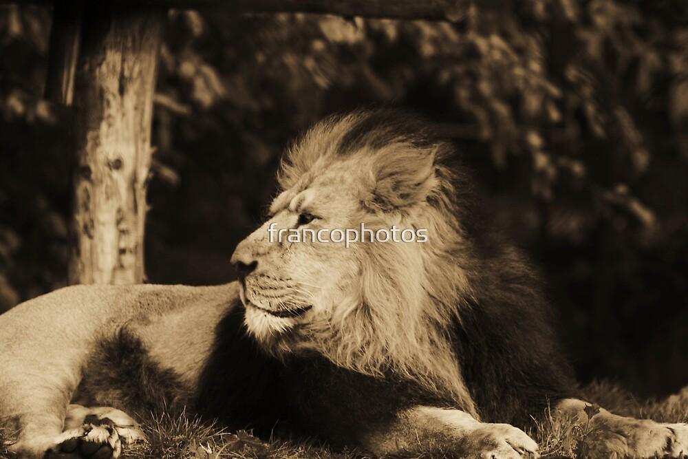 KING! by Franco De Luca Calce