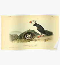 James Audubon Vector Rebuild - The Birds of America - From Drawings Made in the United States and Their Territories V 1-7 1840 - Common or Arctic Puffin Poster