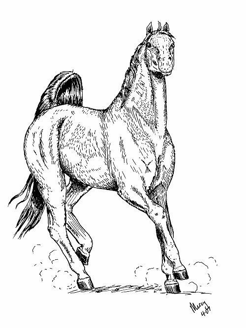 arabian by merci