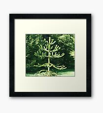 Monkey Puzzle Tree Framed Print