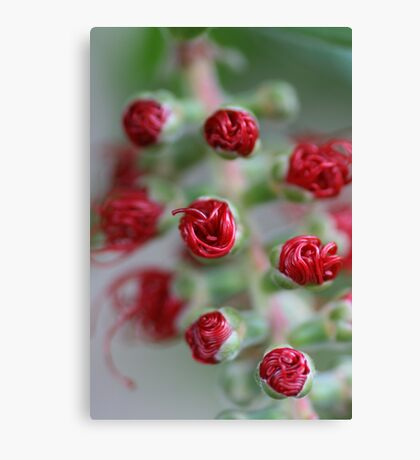 All rolled up Canvas Print