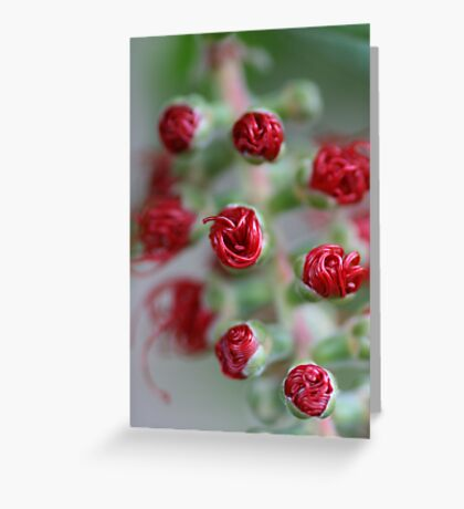 All rolled up Greeting Card