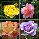 Rosen-Collage im gespiegelten Rahmen von BlueMoonRose