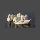 Ducklings in White and Gray 3760 by Candy Paull