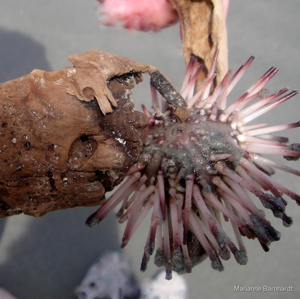 Charleston Urchin by Marianne Barnhardt