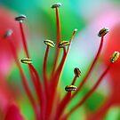 Alien Bugs by Renee Hubbard Fine Art Photography