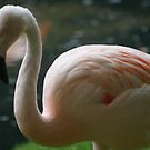 flamingo by rue2