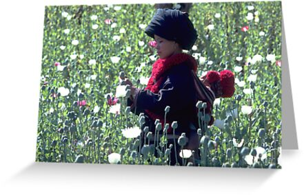 Mien mother and baby harvesting opium poppy by John Spies