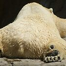 polar bear by rue2