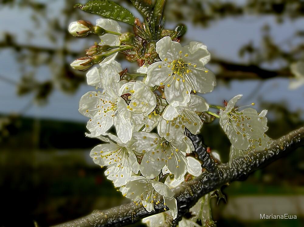 Cherry Blossom Tree by MarianaEwa
