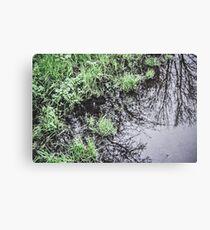 Rain Water Canvas Print