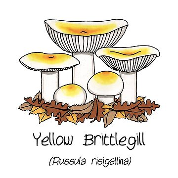 Yellow brittlegill by Immy