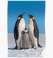 Emperor Penguins and Chick - Snow Hill Island Poster