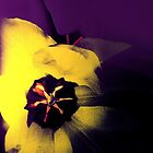 Tulip Abstract by SexyEyes69