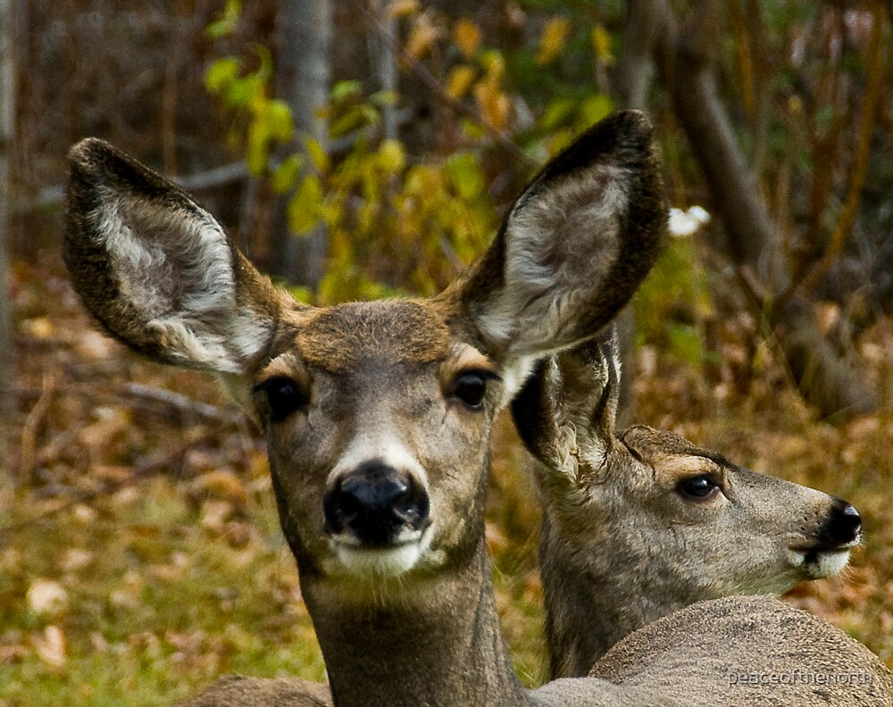 In YER FaCe ...BamBi by peaceofthenorth
