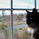 Window Cat Journal by MissIronMax