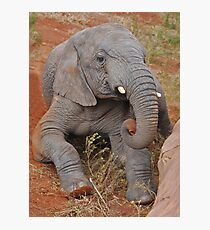 Elephant's Time Out  Photographic Print