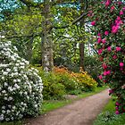 Azaleas & Rhododendrons by Viv Thompson