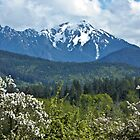 SPRING TIME ~ MOUNT ANGELES by Elaine Bawden