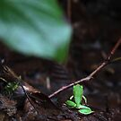 Pacific Tree Frog by Feral Beagle LLC