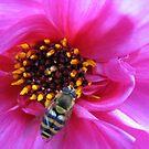 Tiny Mortar Bee on Pink Dahlia Centre von BlueMoonRose