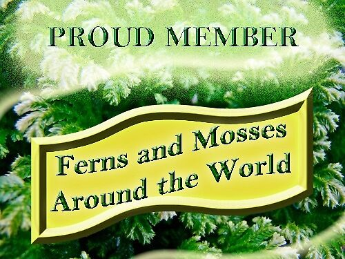 Banner for Ferns and Moses Around the World Group by MotherNature