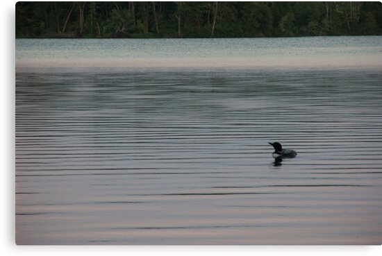 Loon on the Lake by mirandaburski