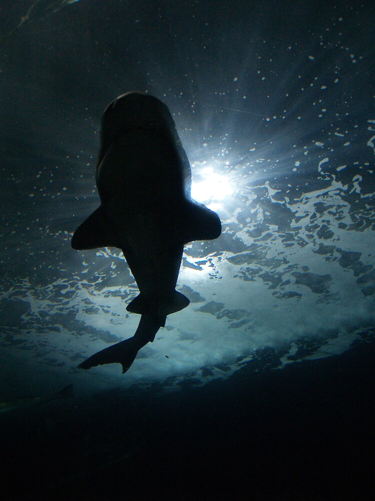Shark Shadow I by JandMPhoto