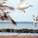 Seagulls by Clayton Bruster