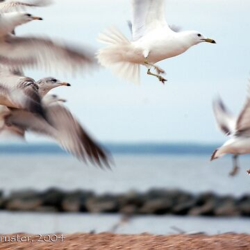 Seagulls by claytonbruster