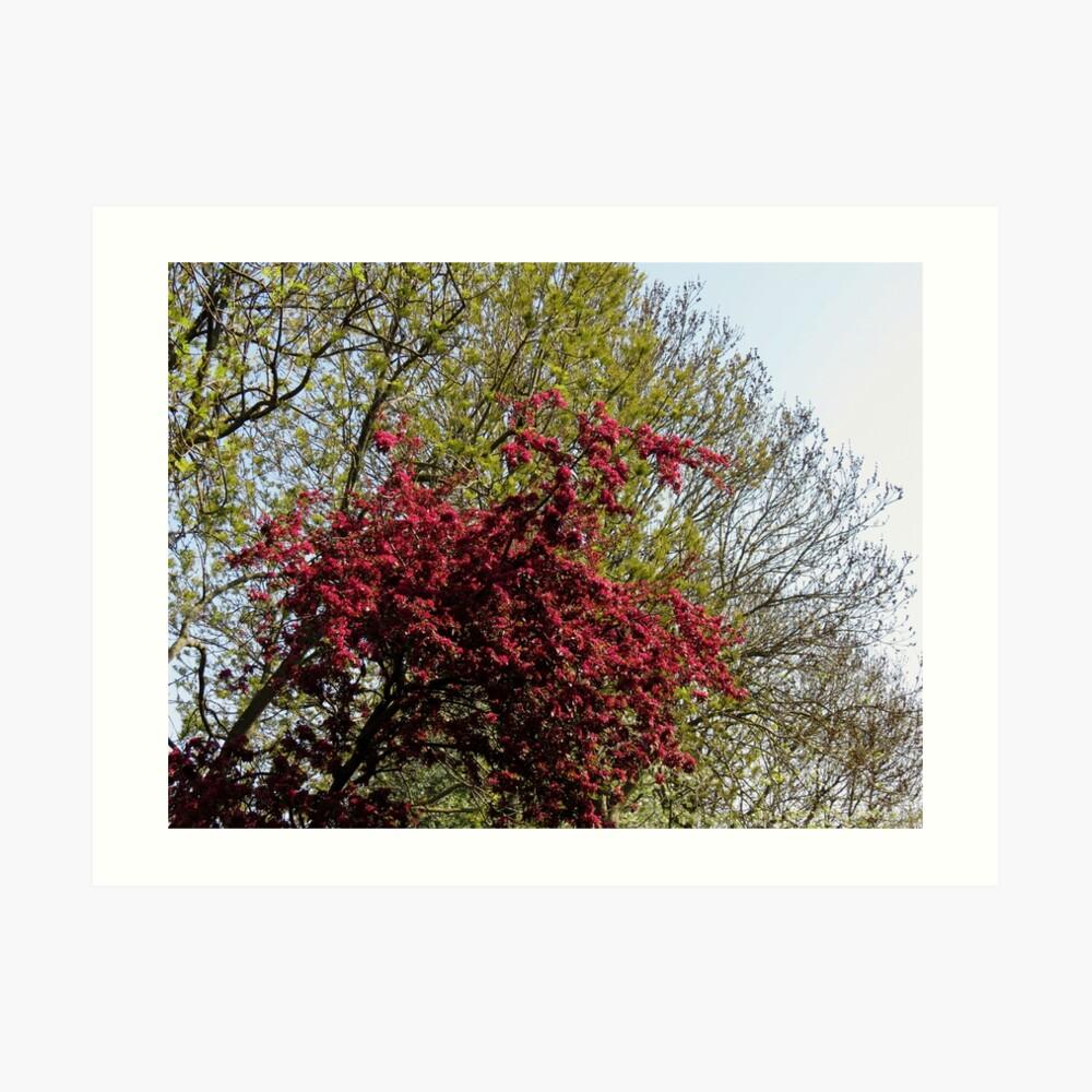 Baum mit roten Blüten Kunstdruck