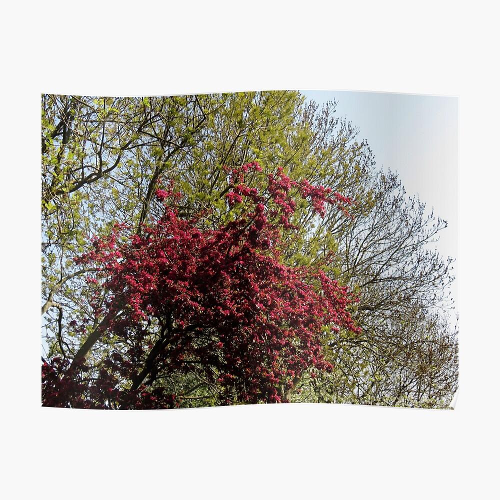 Baum mit roten Blüten Poster