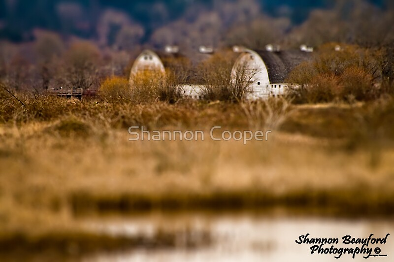 Mini Twin Barns by Shannon Beauford