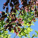Leaves by Jon  Johnson