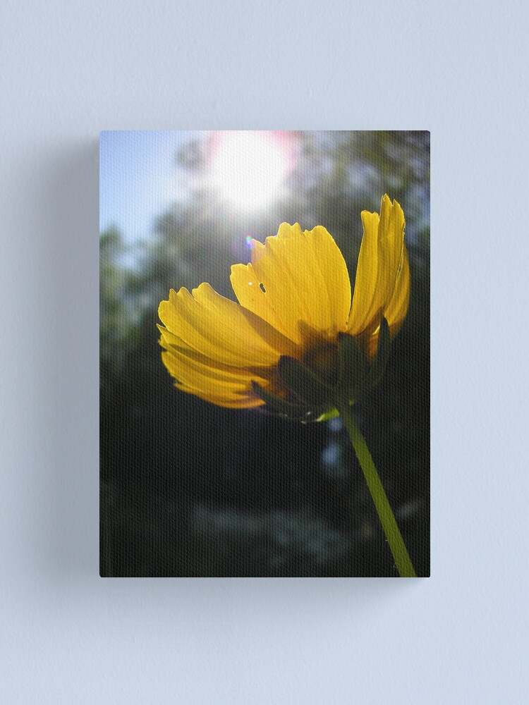 Alternate view of Sun Flower Canvas Print
