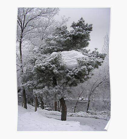 Tree Glacier Poster