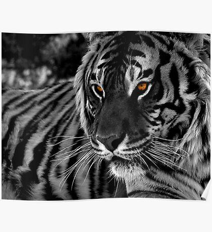 Tiger Eyes II Poster