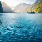 Morning sun glow and dolphins at Milford Sound by Danielasphotos