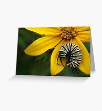 Caterpillar Nap Greeting Card