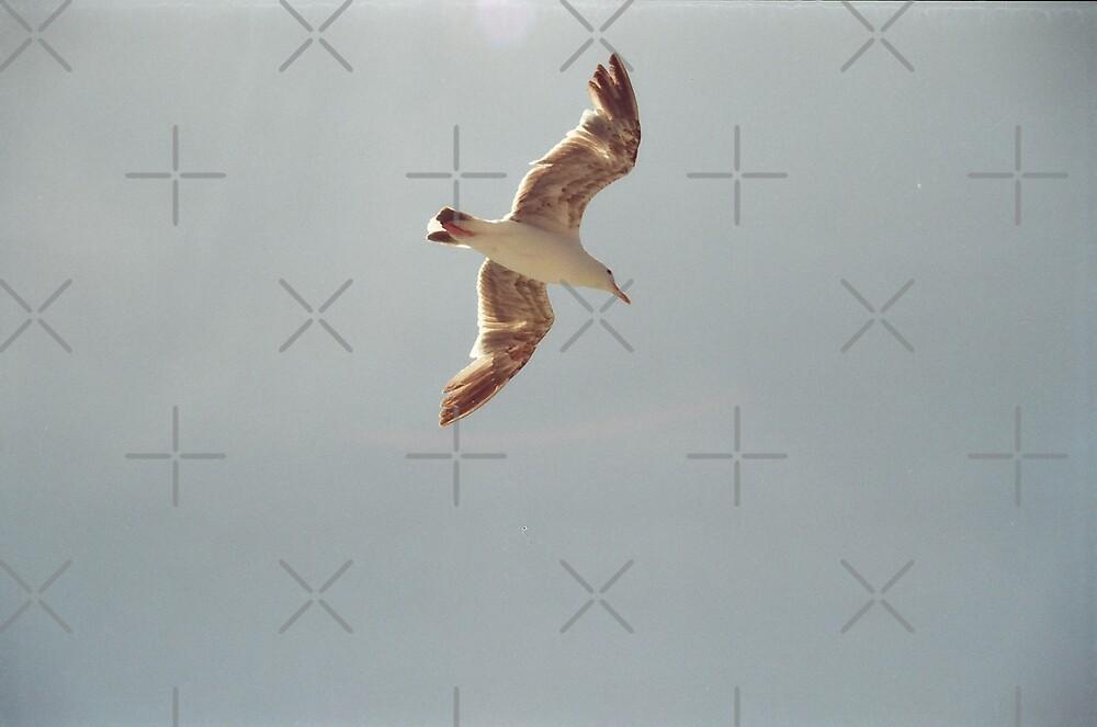 Flight of a Gull! by Kymbo