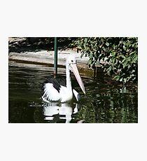 pelican point Photographic Print