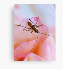 The Rose Bug Canvas Print