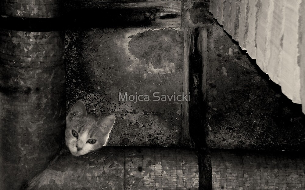 Hmm, hope I'm safe uphere by Mojca Savicki
