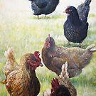 chickens by Joe Helms