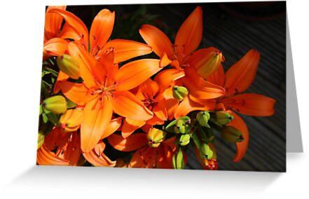 Orange Blast II by SidelineArt