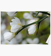 Morning Bloom IV Poster