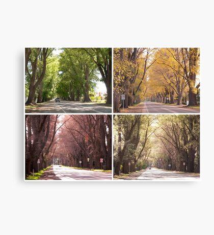 Seasons of The Avenue - Bacchus Marsh Canvas Print