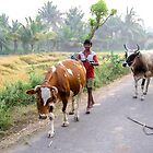 Coming home from grazing by indiafrank